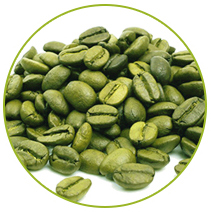 Green Coffee Seed
